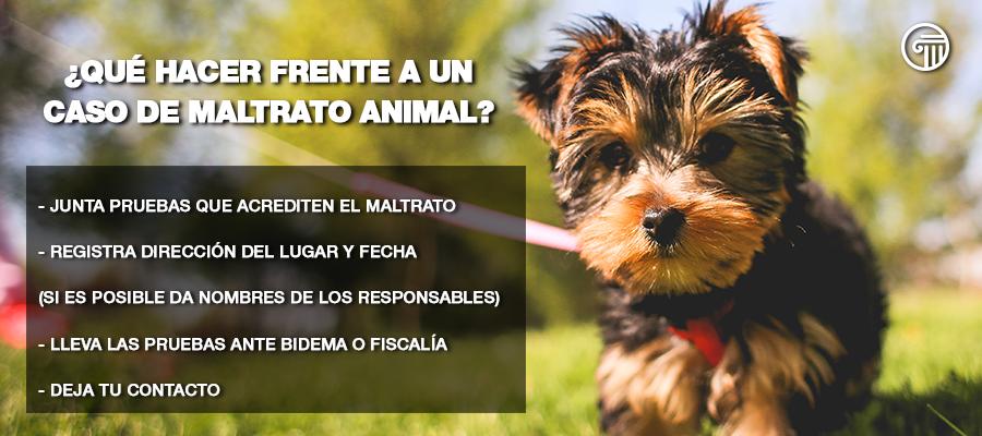 denuncia maltrato animal