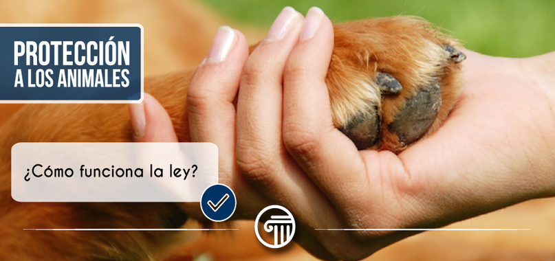 ley proteccion animal